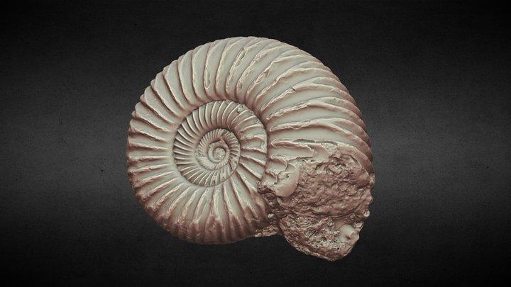 【Xray-CT】Ammonite [アンモナイト] 3D Model
