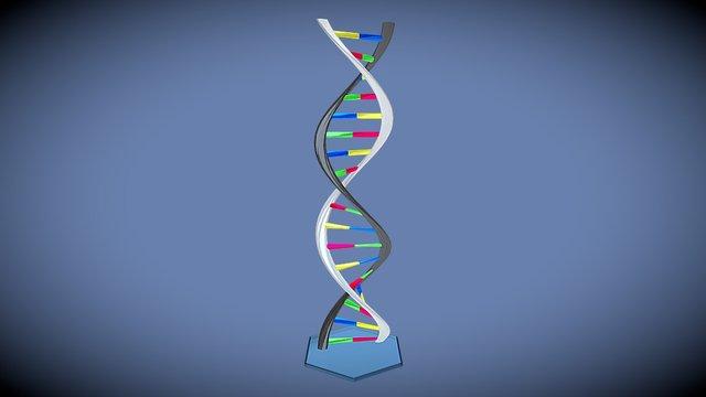 ADN 3D Model