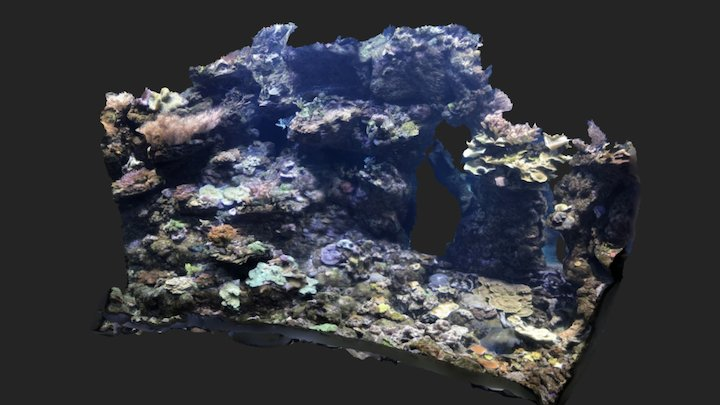 Steinhart Philippine Reef Buddha Wall 3D Model