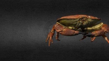 Crab Walk 3D Model