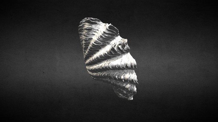 Tridacna squamosa 3D Model