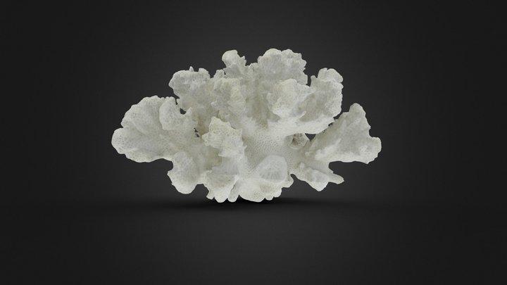 Coral v2.0 3D Model
