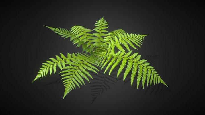 Ferns lowpoly model 3D Model