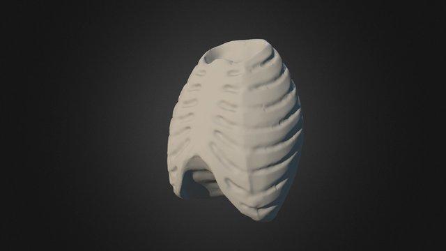 Ribcage Simplification 4 3D Model