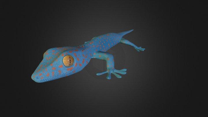 Tokay Gecko 3D Model