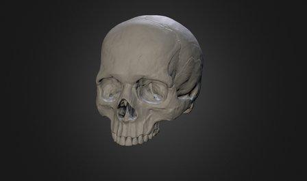 Final Skull 3D Model