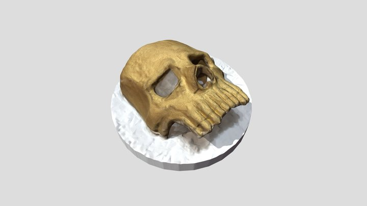 Skull Half Mask 3D Model