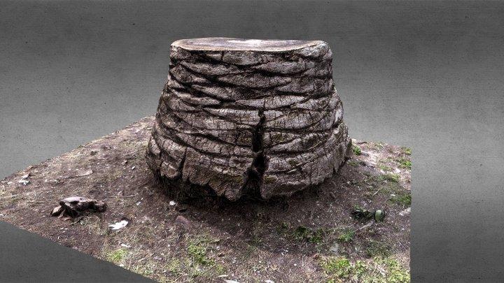 Palm Tree Trunk - Agisoft Coaching 3D Model