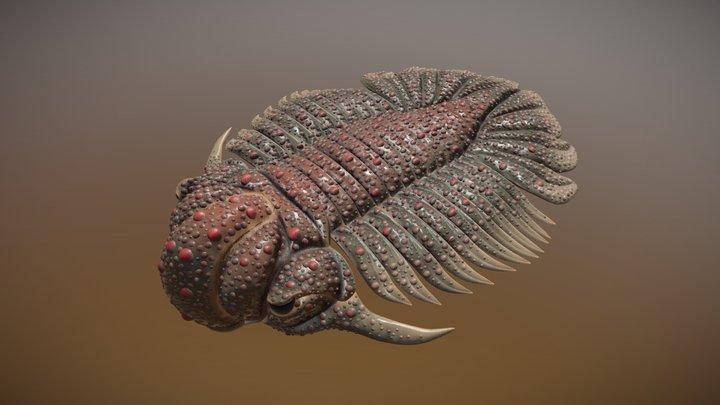 trilobite Dicranopeltis scabra propinqua 3D Model