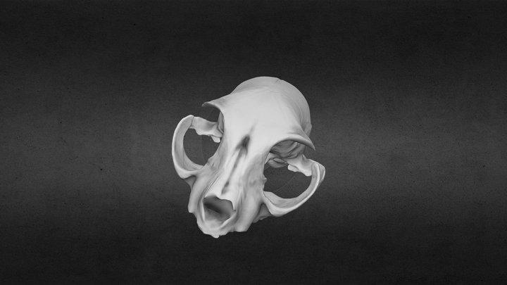 Felis silvestris catus Skull 3D Model