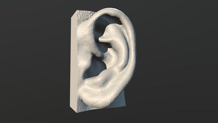 Sample Ear 3D scan -Male 3D Model