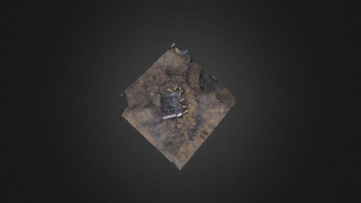 Fox Skulls from Agvik Archaeological Site 3D Model