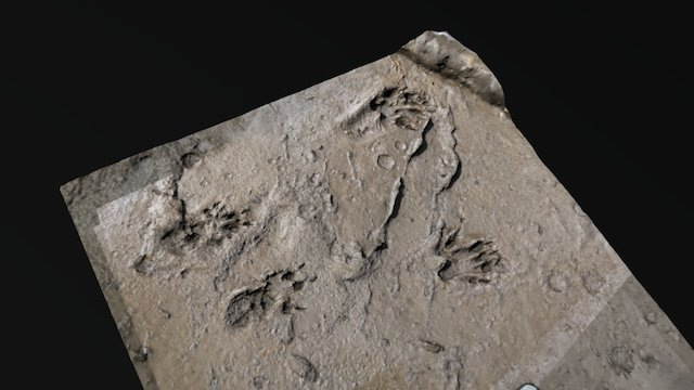 Squirrel tracks 3D Model