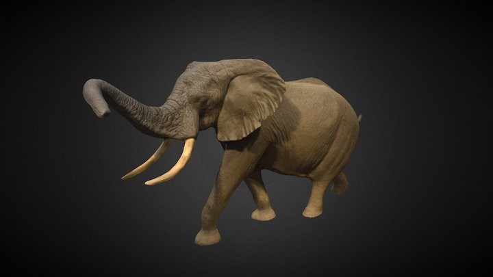 Elephant in the Rotunda (V2) 3D Model