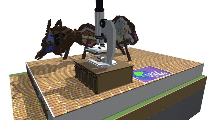 Anatomy of an Ant 3D Model