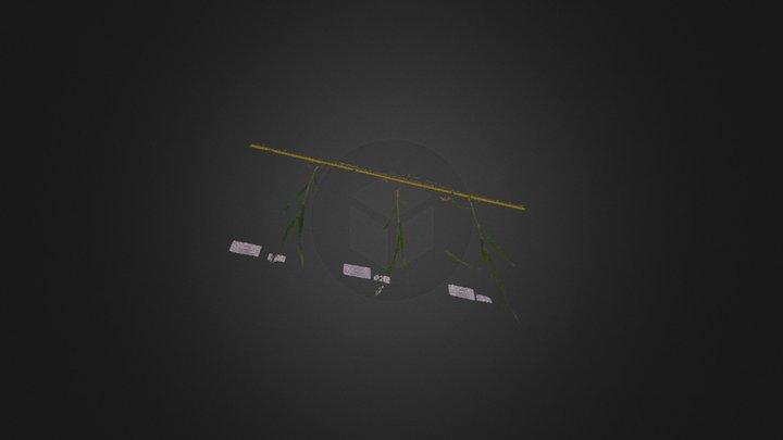 3 plantes 3D Model