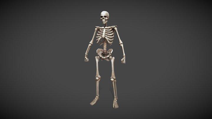 Low-poly Skeleton 3D Model