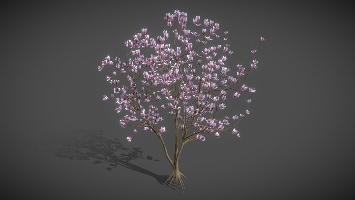 JA11 Magnolia Soulangeana- Saucer Magnolia 3D Model