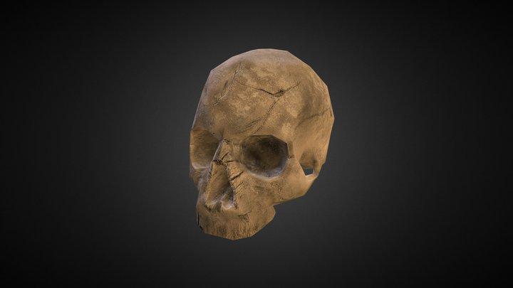 Human skull (Asset) 3D Model