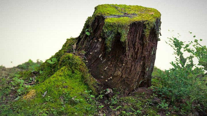 Tree Stump - Nagano, Japan 3D Model