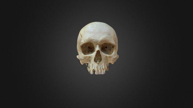 Frederick's skull 3D Model