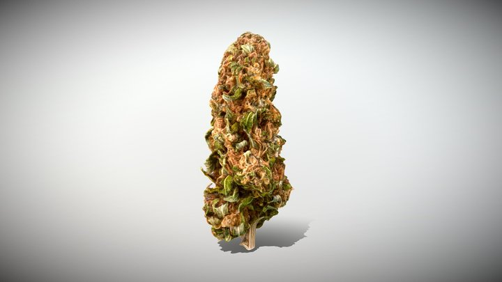 Marijuana Bud - Photoscanned PBR 3D Model