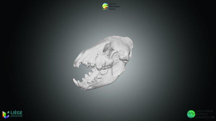 Hyène des cavernes, Crocuta spelaea 3D Model