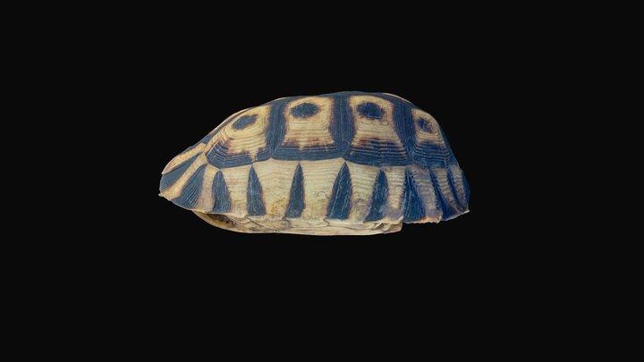 Tortoise shell 3D Model