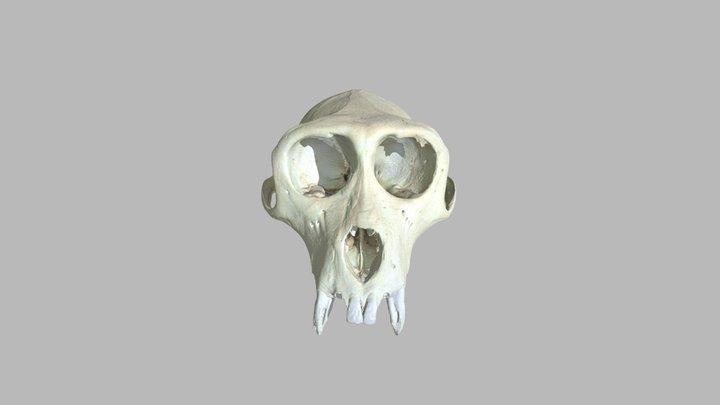 Macaque VRML 3D Model