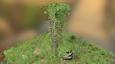 Ivy Bush 3D Model