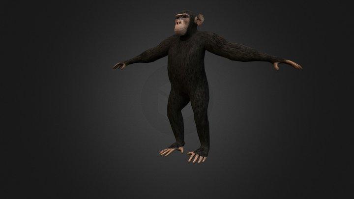 Chimpanzee 3D Model