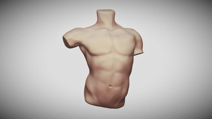 Torso study 3D Model