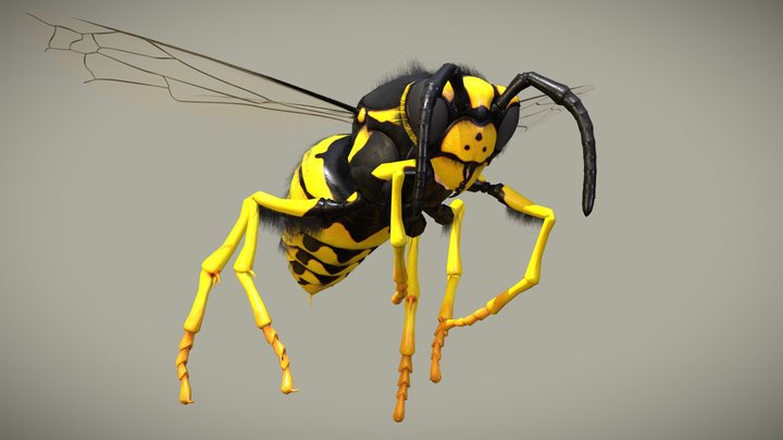 Wasp - Vespula Germanica 3D Model