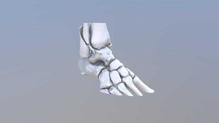 24.01.PA 3D Model