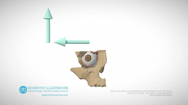 Abduction and Elevation 3D Model