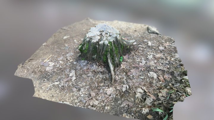 Test Stump 3D Model