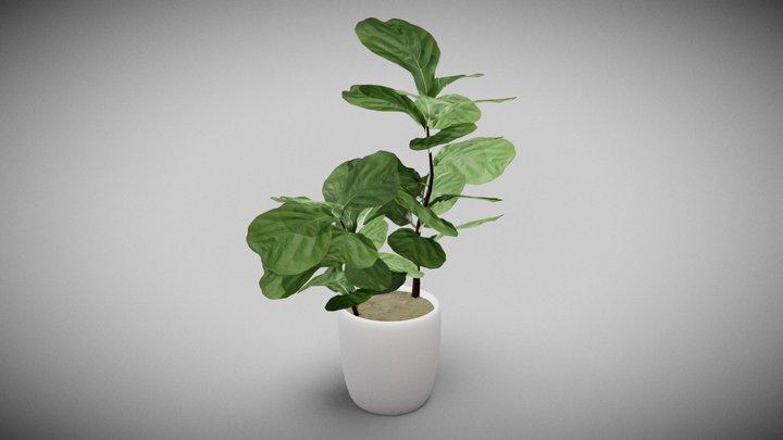 Plant Fiddle Leaf Fig 3D Model
