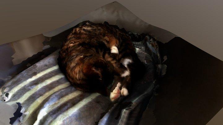 Sleepy Cat 2 - VisualSFM 3D Model