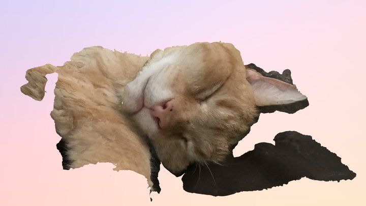 Cat - Crunchie 3D Model