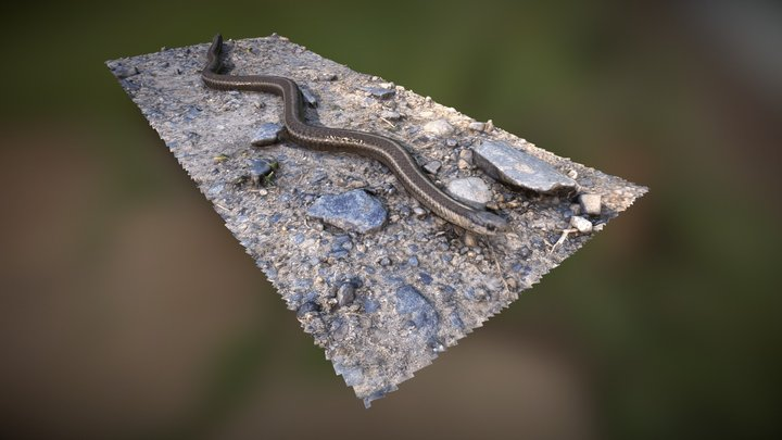 Garter Snake with nipped tale 3D Model