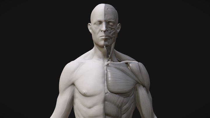 Anatomy2 3D Model
