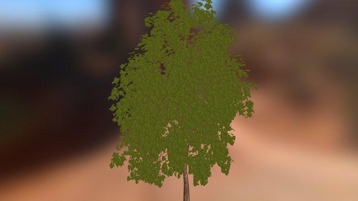 Oak_Tree 3D Model