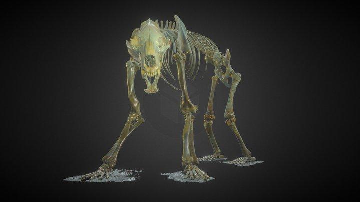 Ursus arctos (Grizzly Bear) 3D Model