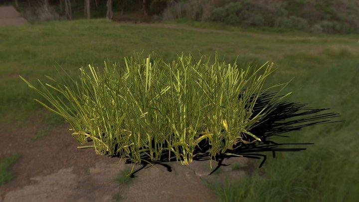 Yard Grass 3D Model