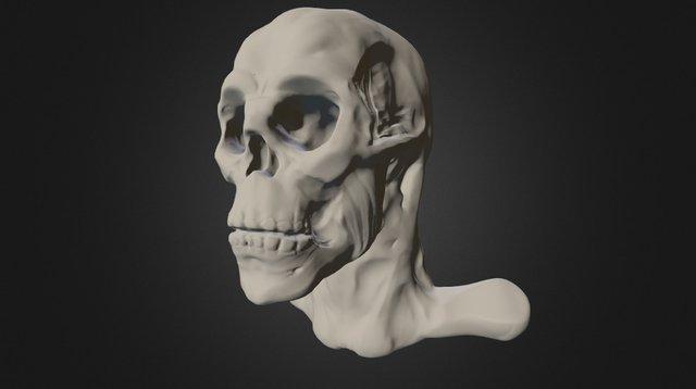 Skull Study 2015 3D Model