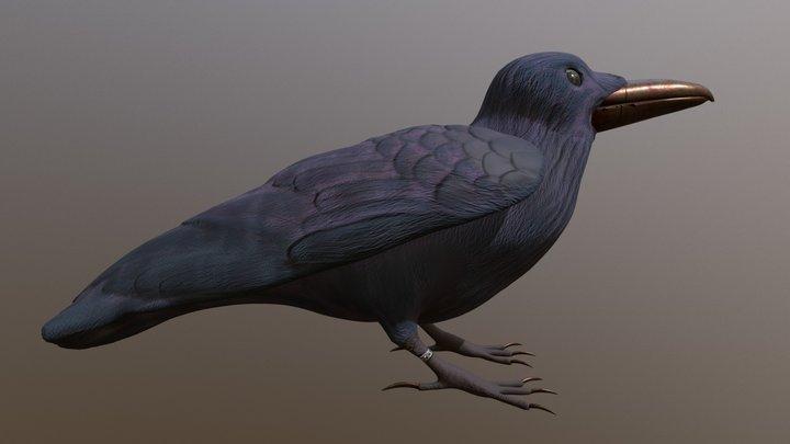 Crow 3D Model
