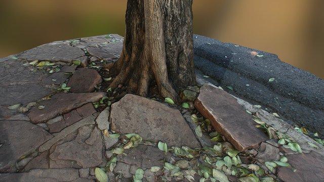 City Roots 3D Model