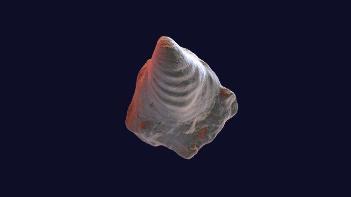 Inoceramus stantoni 28951 Syntype 3D Model