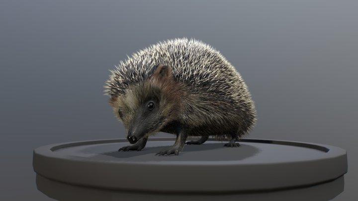 Hedgehog wip 3D Model