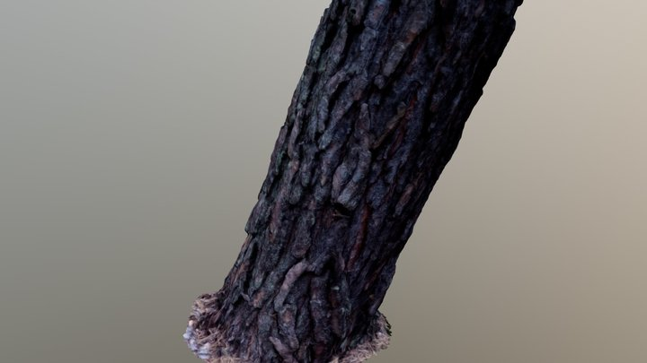 Photogrammetry - Tree Scan 2 3D Model